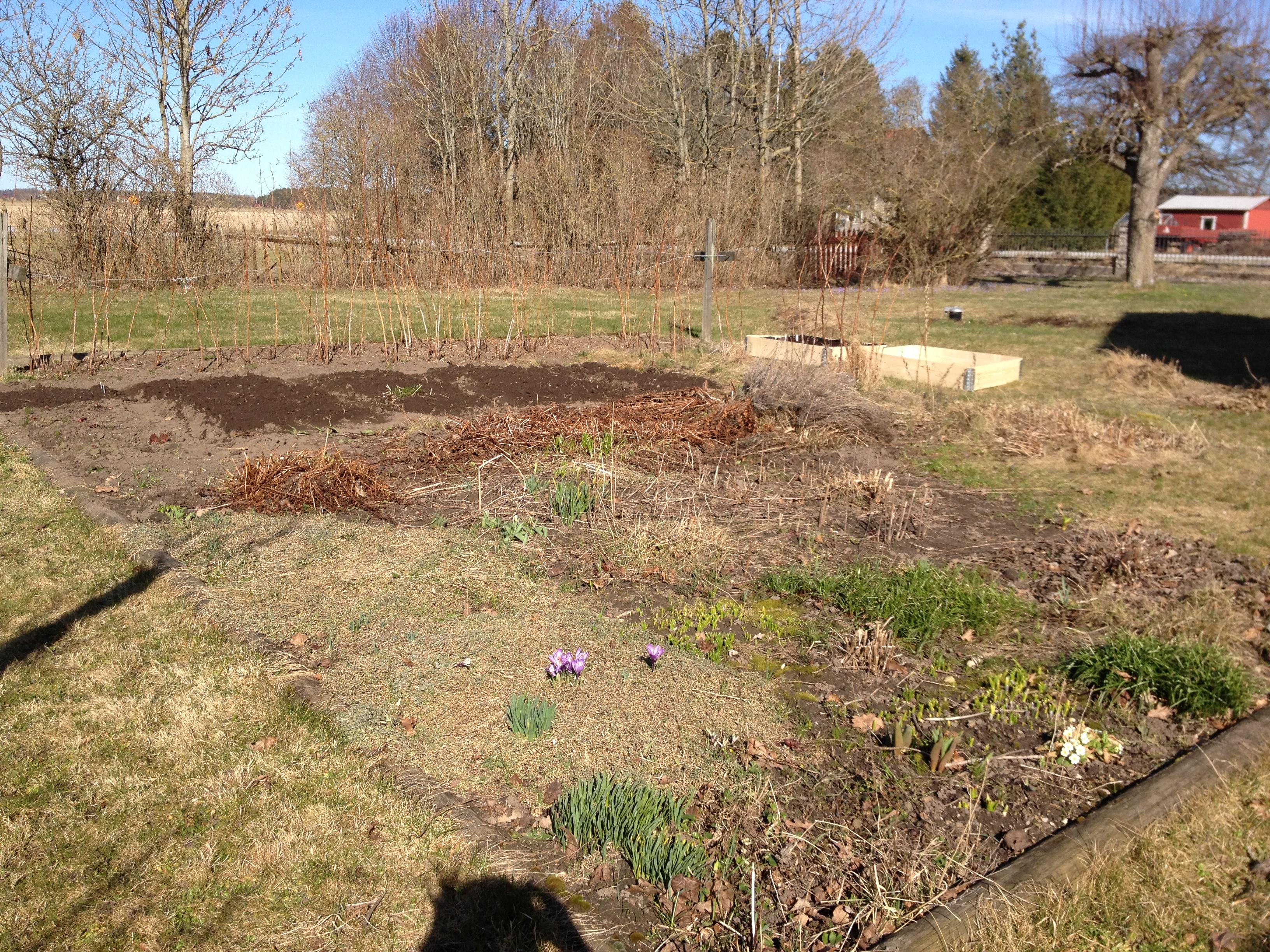 Trädgårdslandet i april