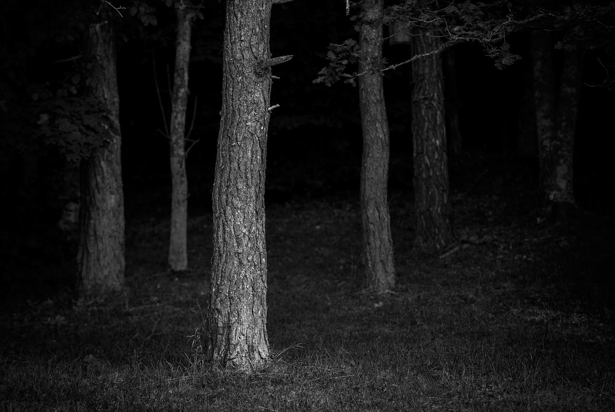 dagens_bild_175_klinteberget_träd_DSC6248