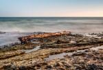 Gotland Danbo Stock Hav