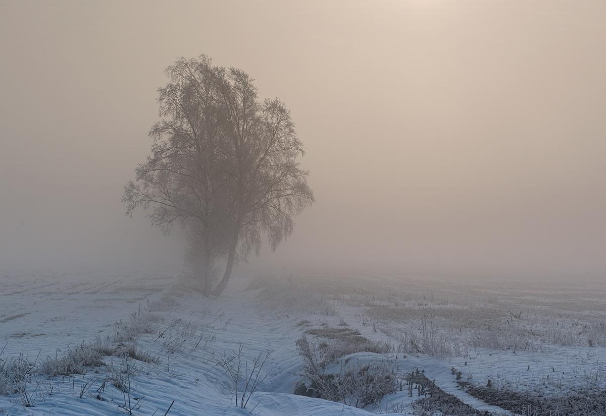Gotland Viklau Dimma