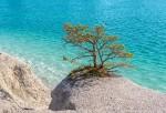 Gotland Blå Lagunen Träd