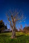 Gotland Väte Stjärnor Träd