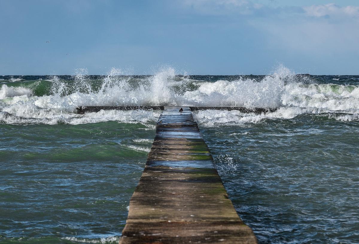 Gotland Visby Tott Brygga Storm Fågel
